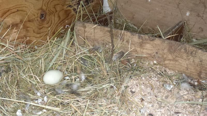 Het eerste ei